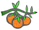 3 oranges62-50